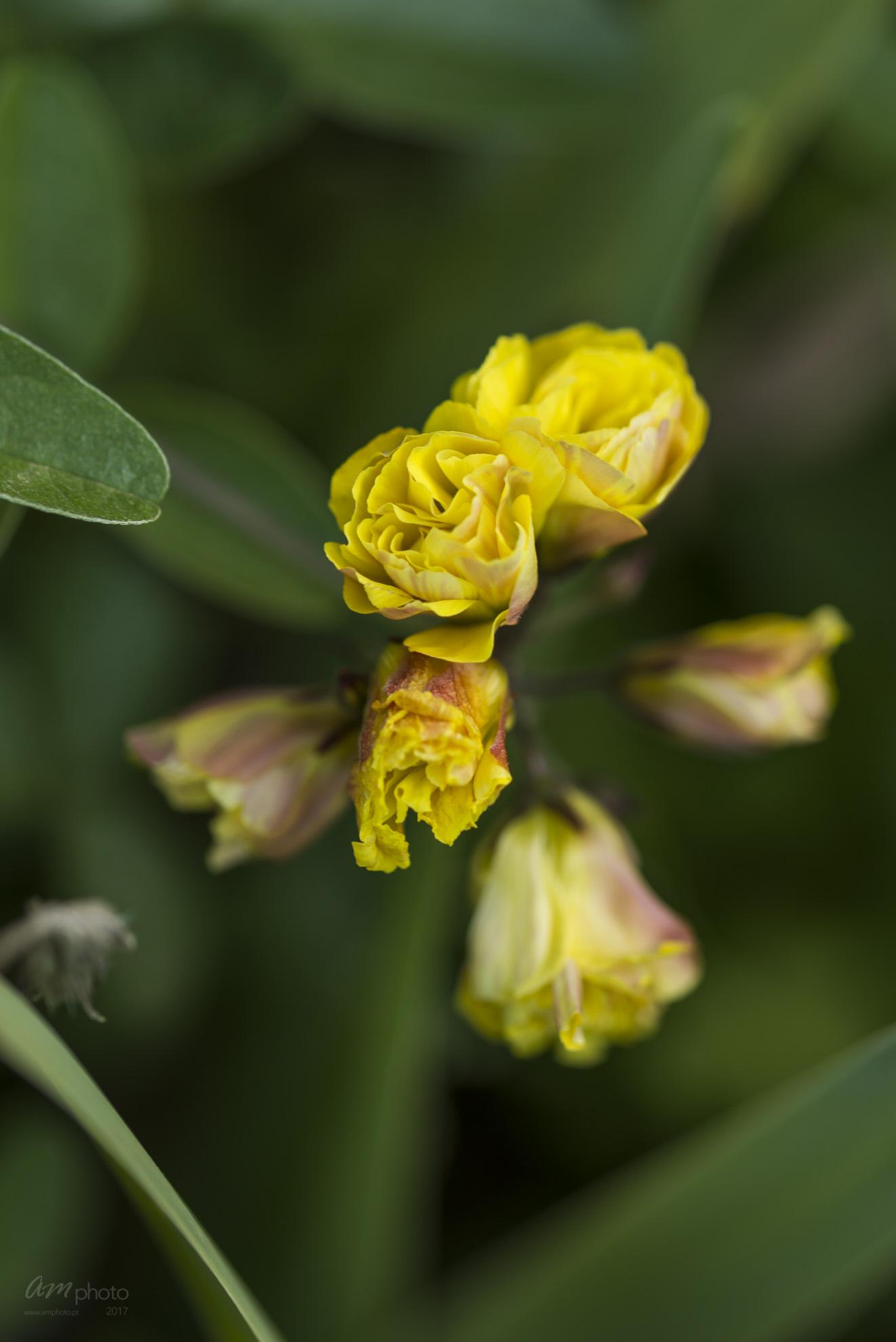 Wild Flowers-701