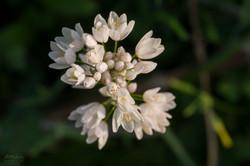 Wild Flowers-630