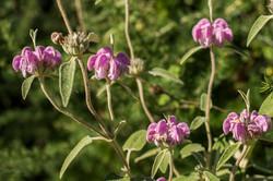 Wild Flowers-266