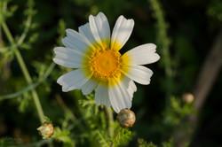 Wild Flowers-633