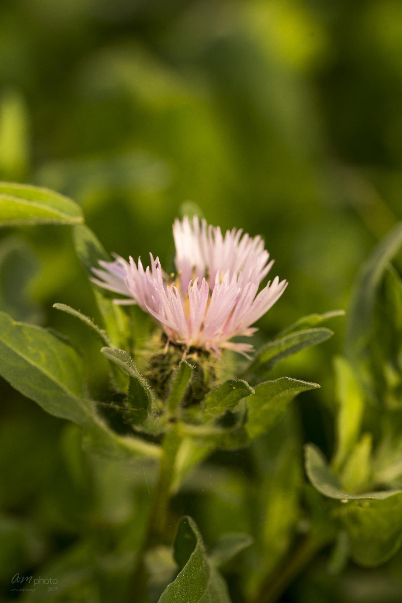 Wild Flowers-567
