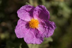 Wild Flowers-704