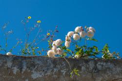 Wild Flowers-44