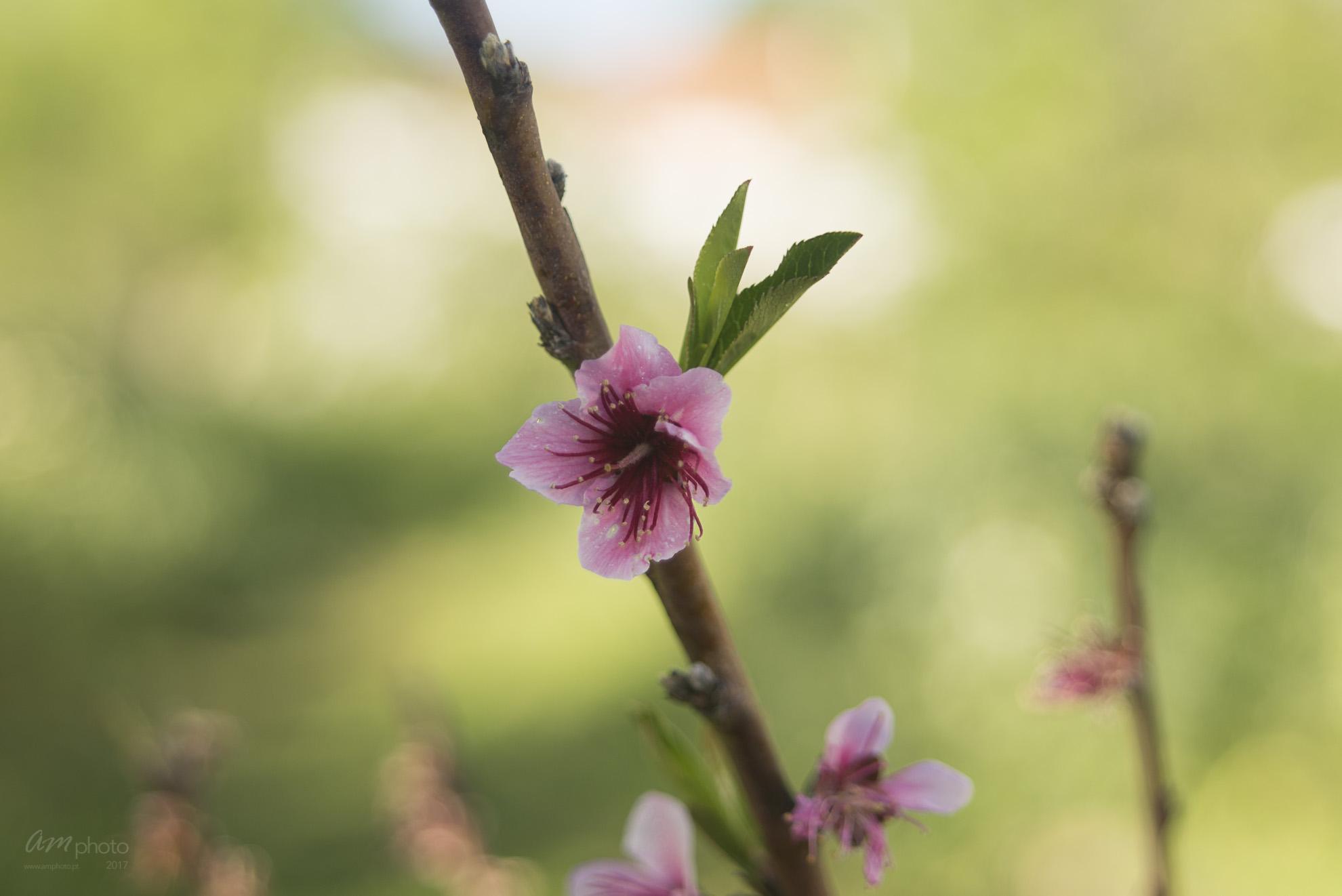 Wild Flowers-336