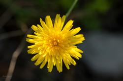Wild Flowers-684