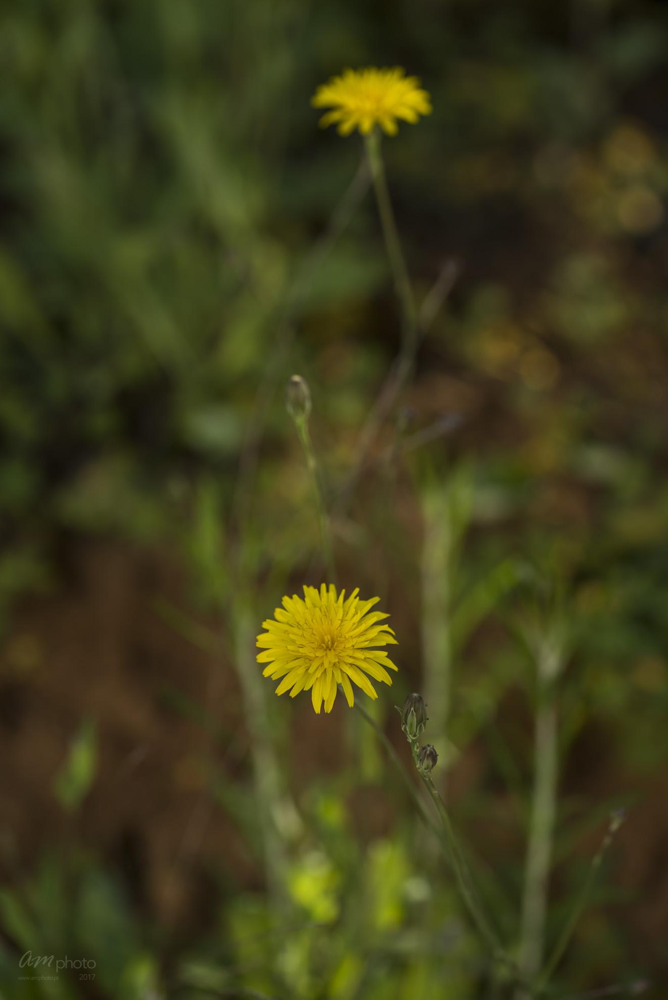 Wild Flowers-733