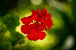 Wild Flowers-667