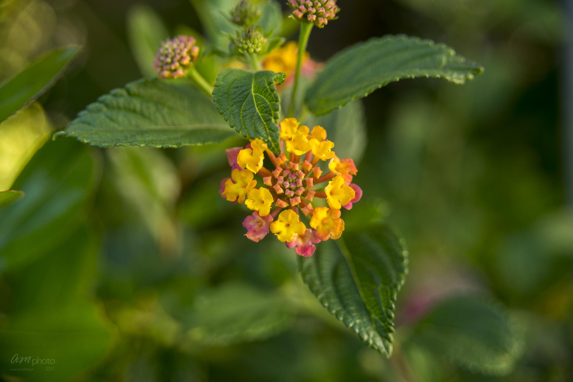 Wild Flowers-315