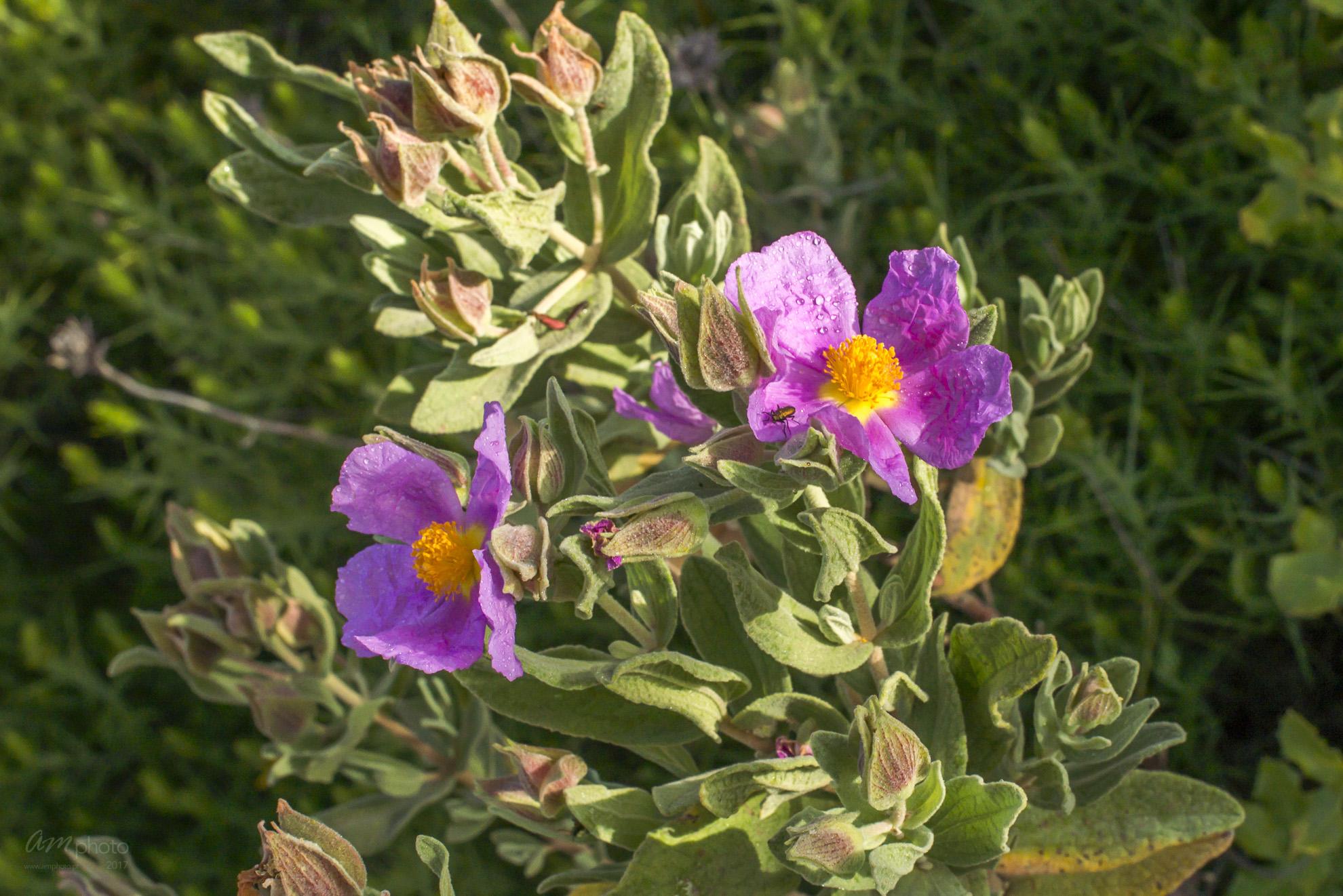 Wild Flowers-118