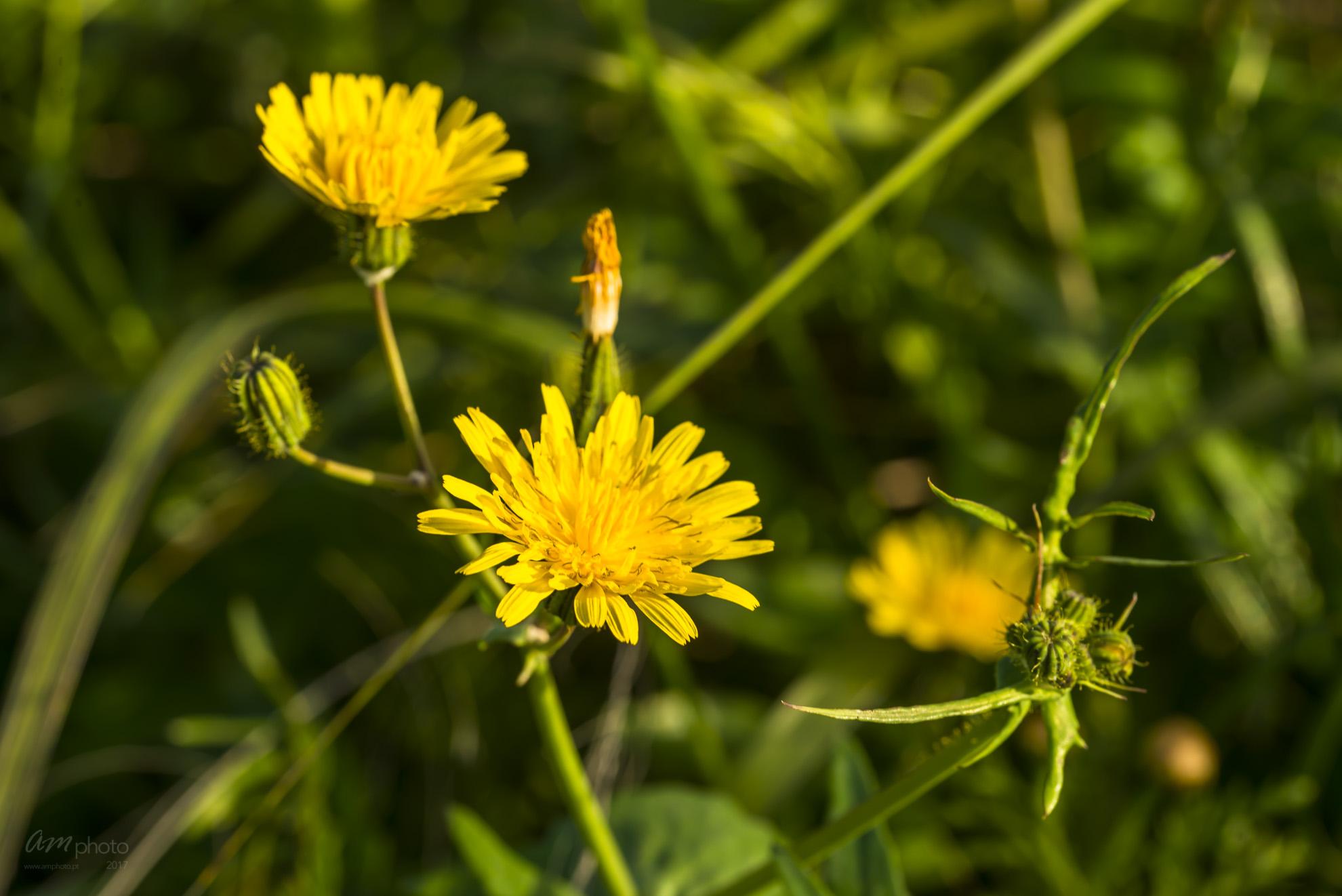 Wild Flowers-643