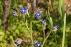 Wild Flowers-215