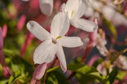 Wild Flowers-612