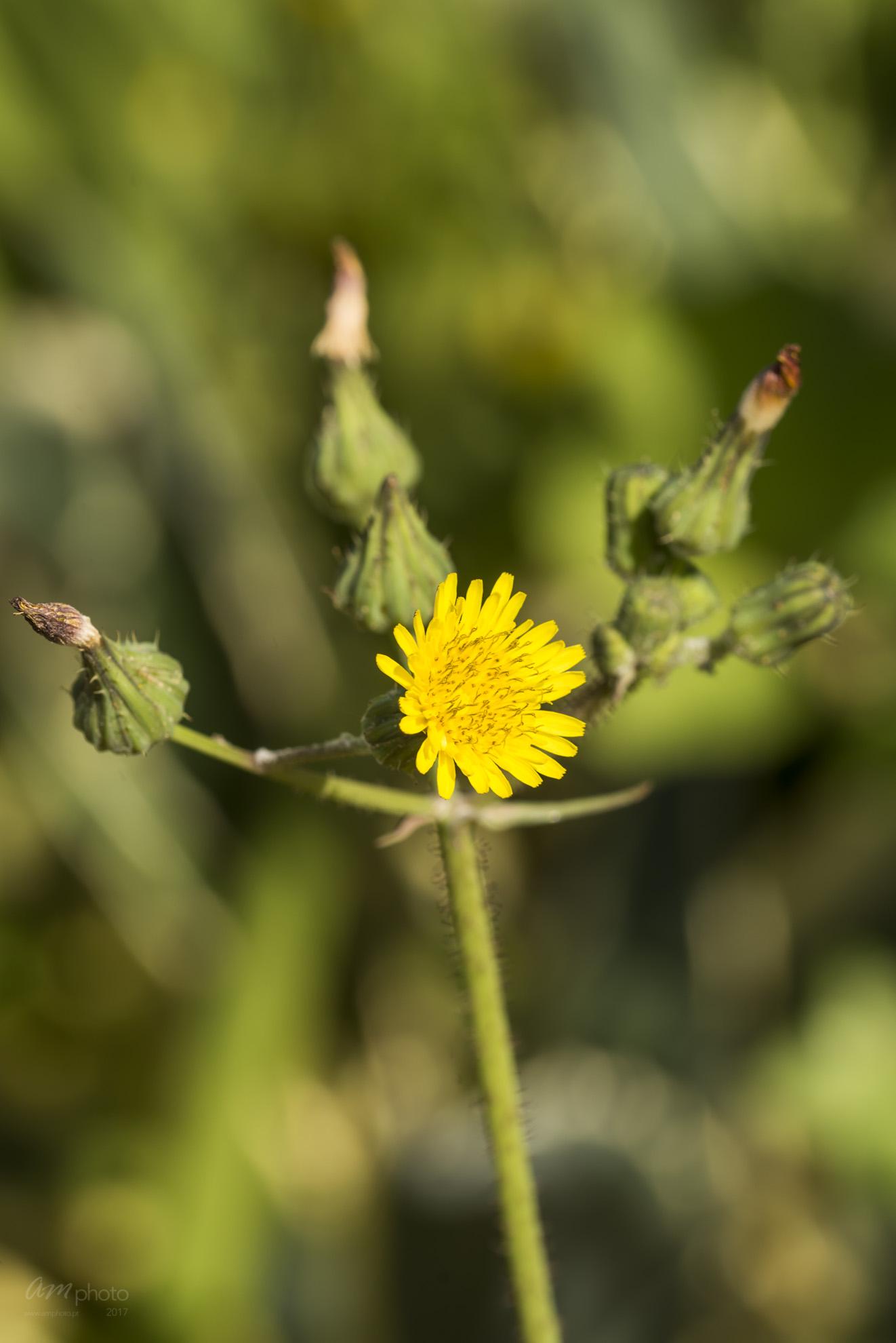Wild Flowers-664