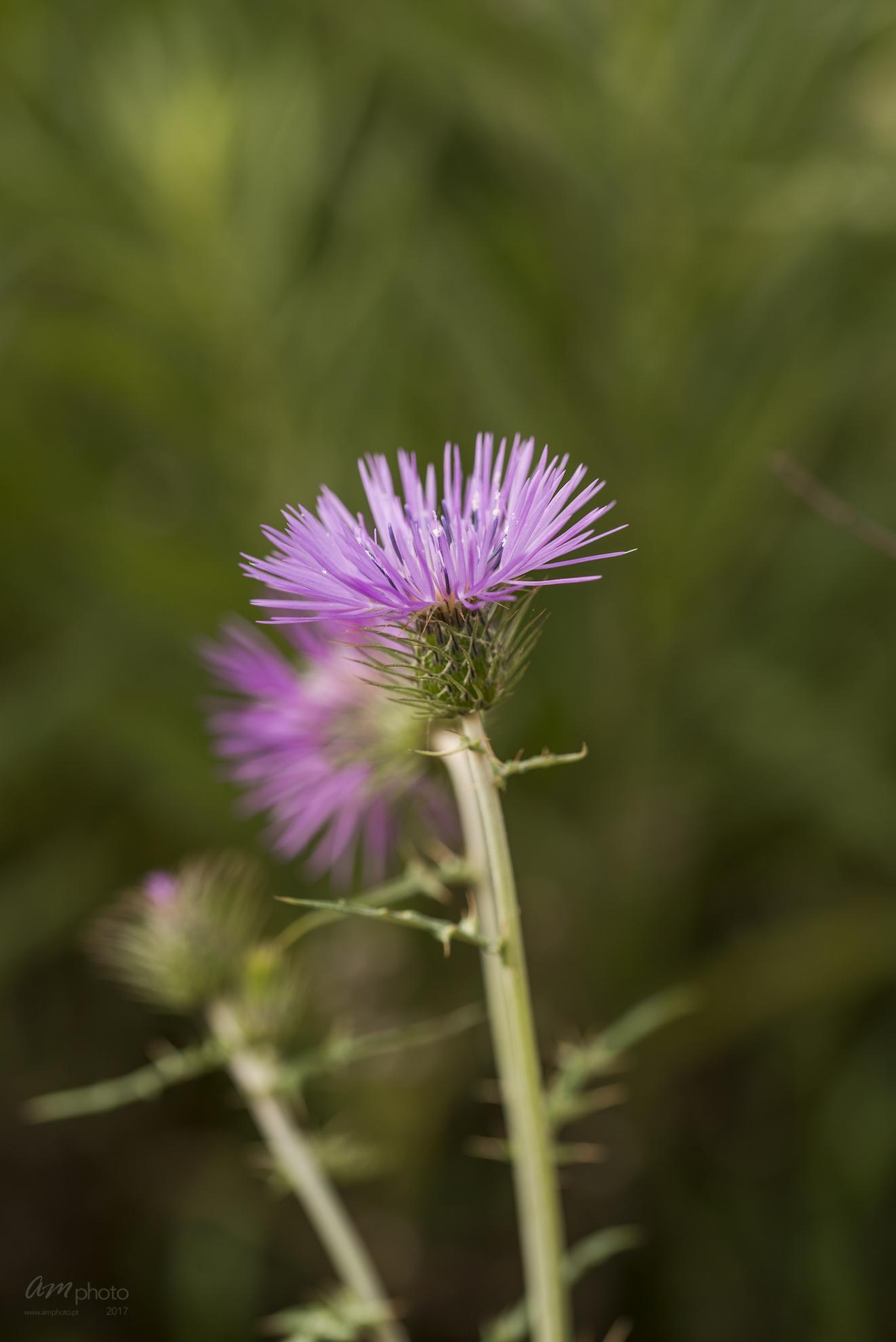 Wild Flowers-521