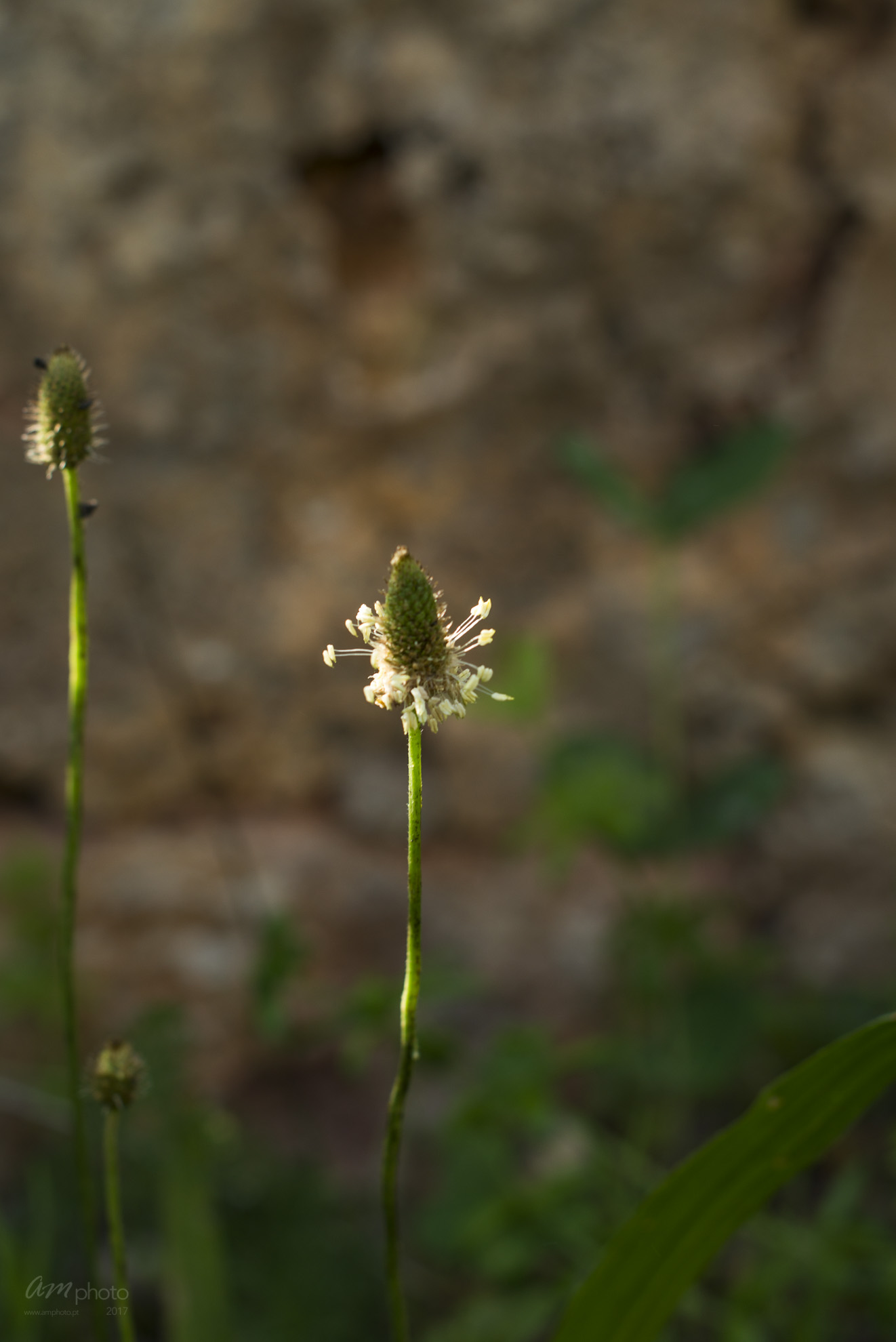 Wild Flowers-141