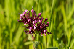 Wild Flowers-683