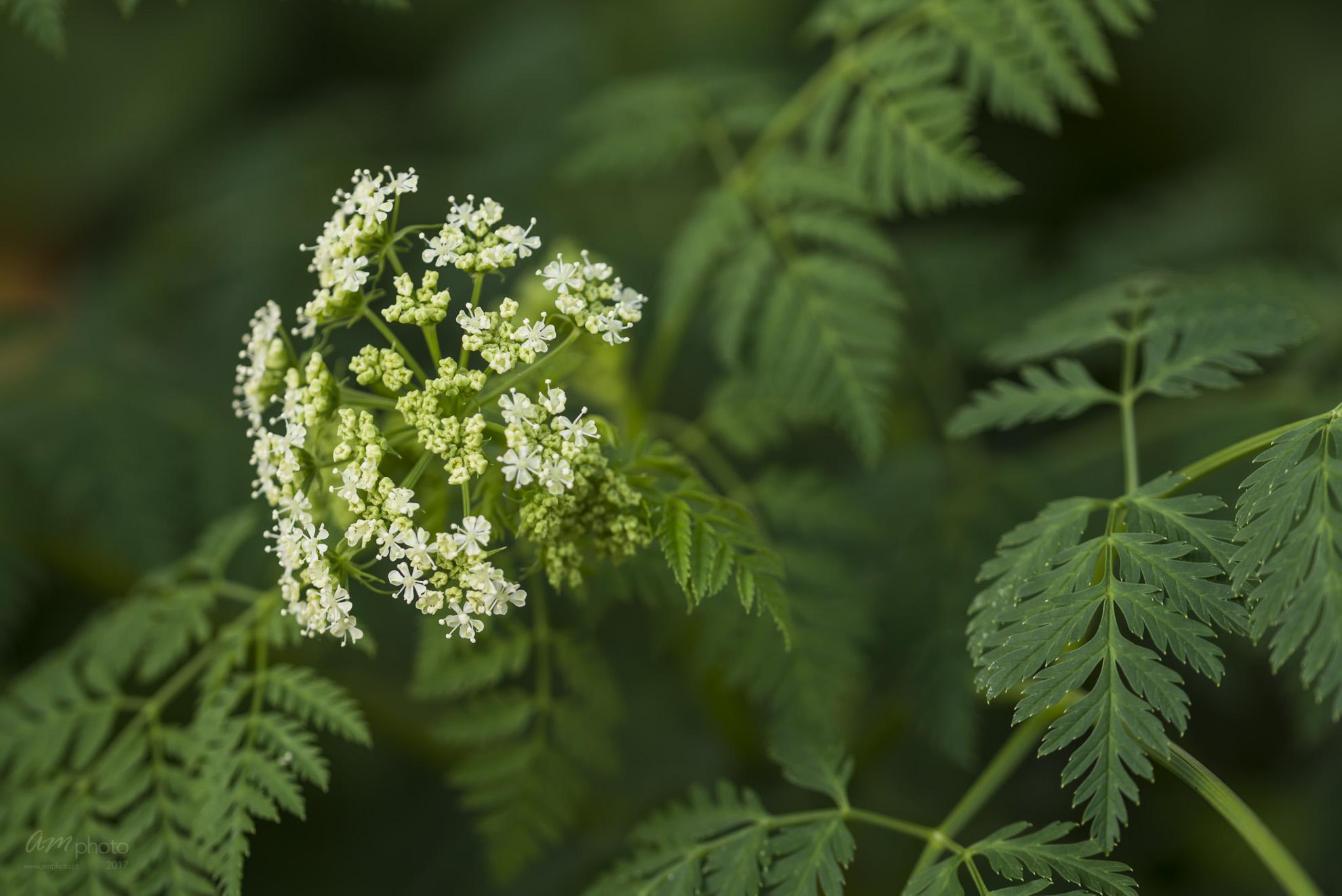 Wild Flowers-656