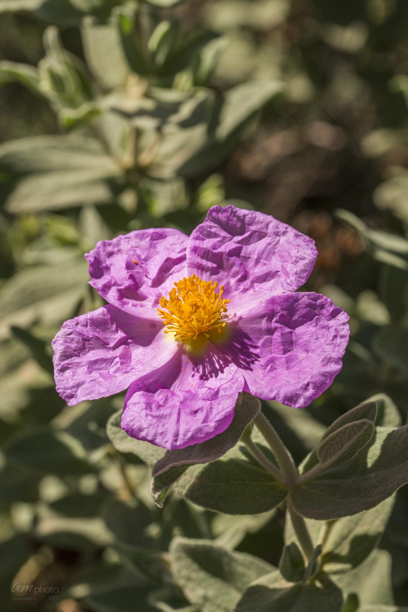 Wild Flowers-592