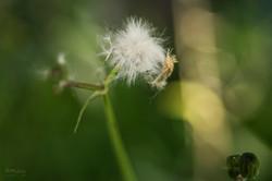 Wild Flowers-347
