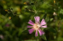 Wild Flowers-340