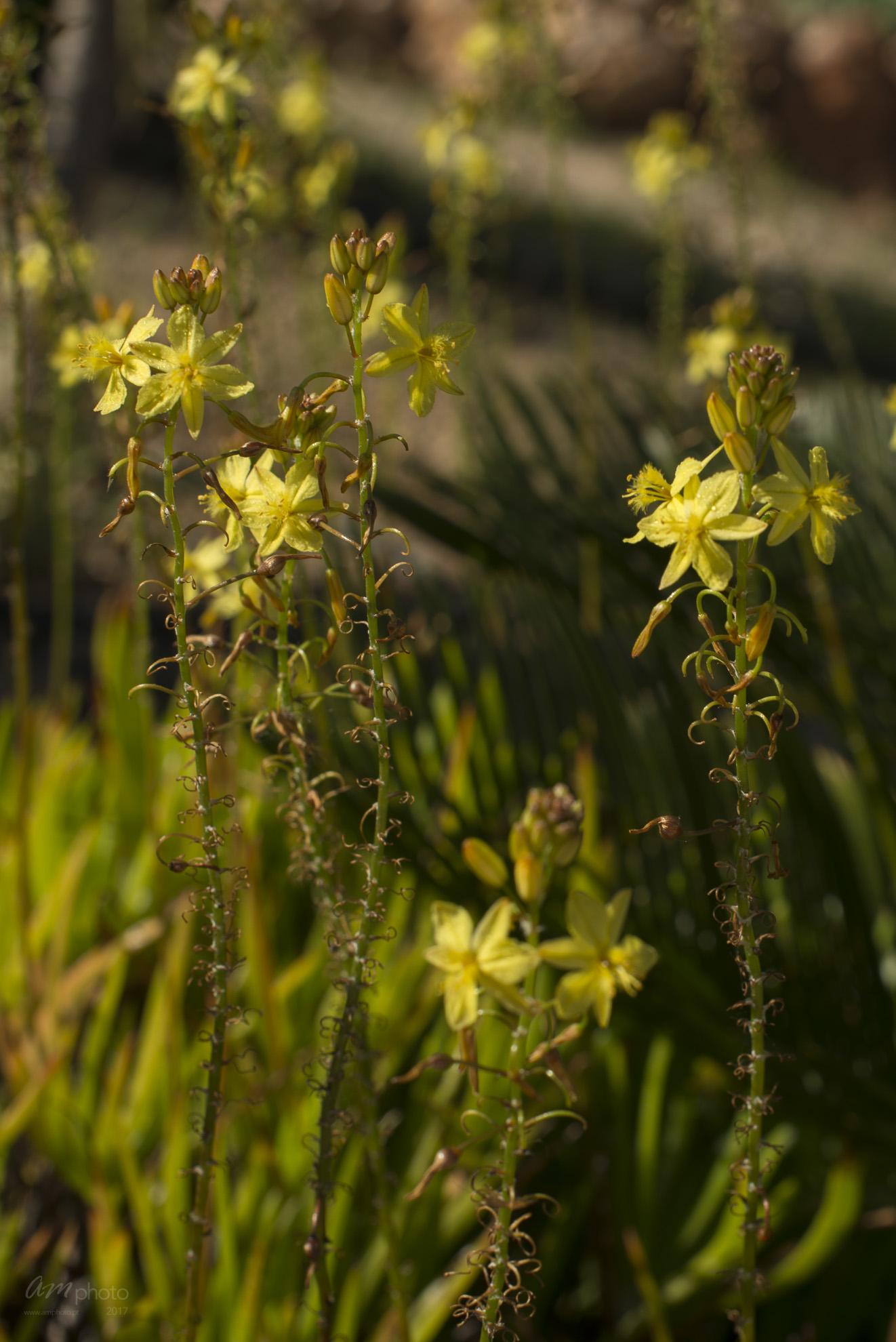 Wild Flowers-297