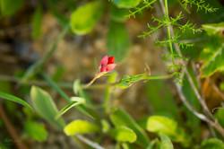 Wild Flowers-640