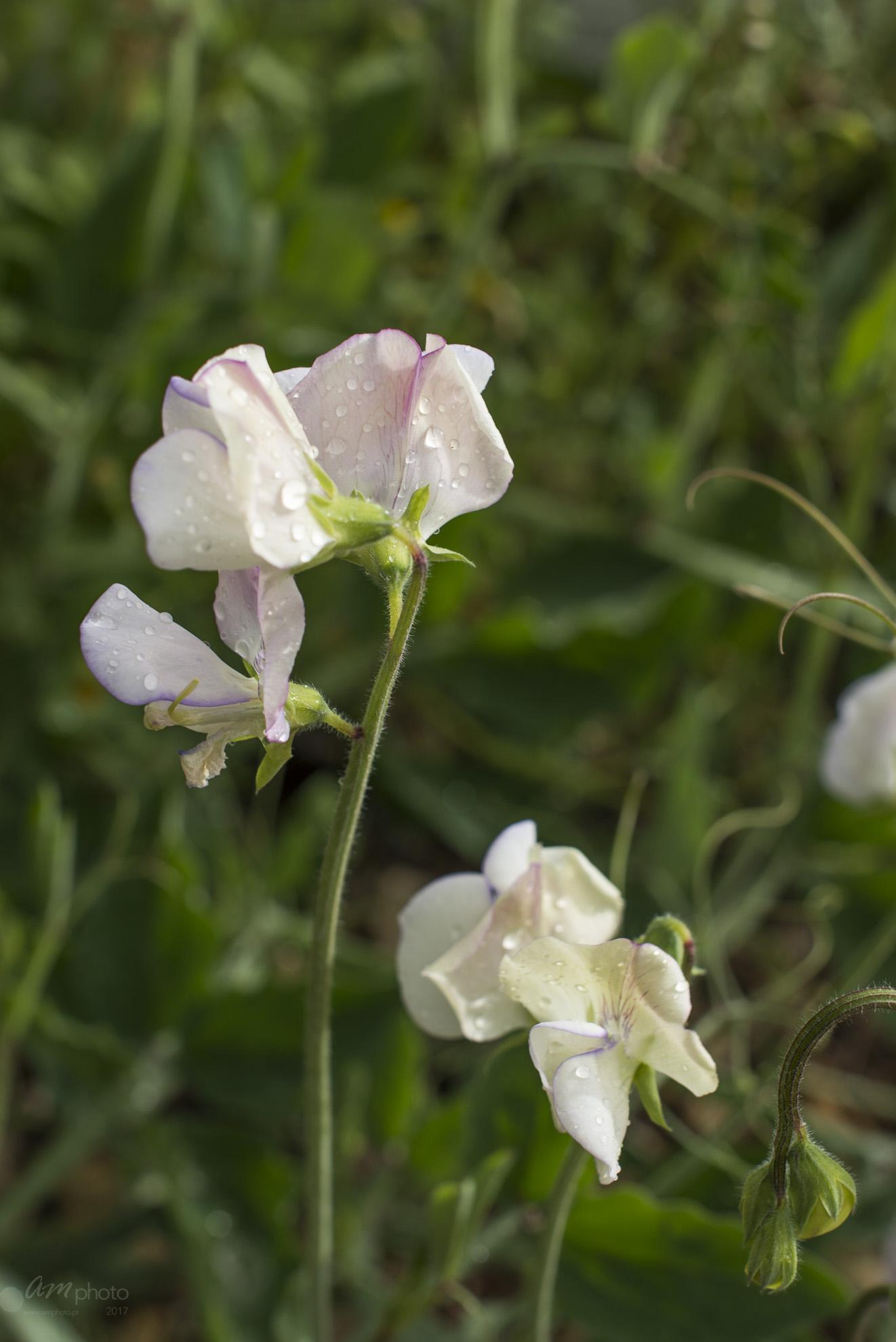 Wild Flowers-467