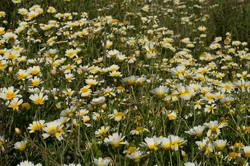 Wild Flowers-289