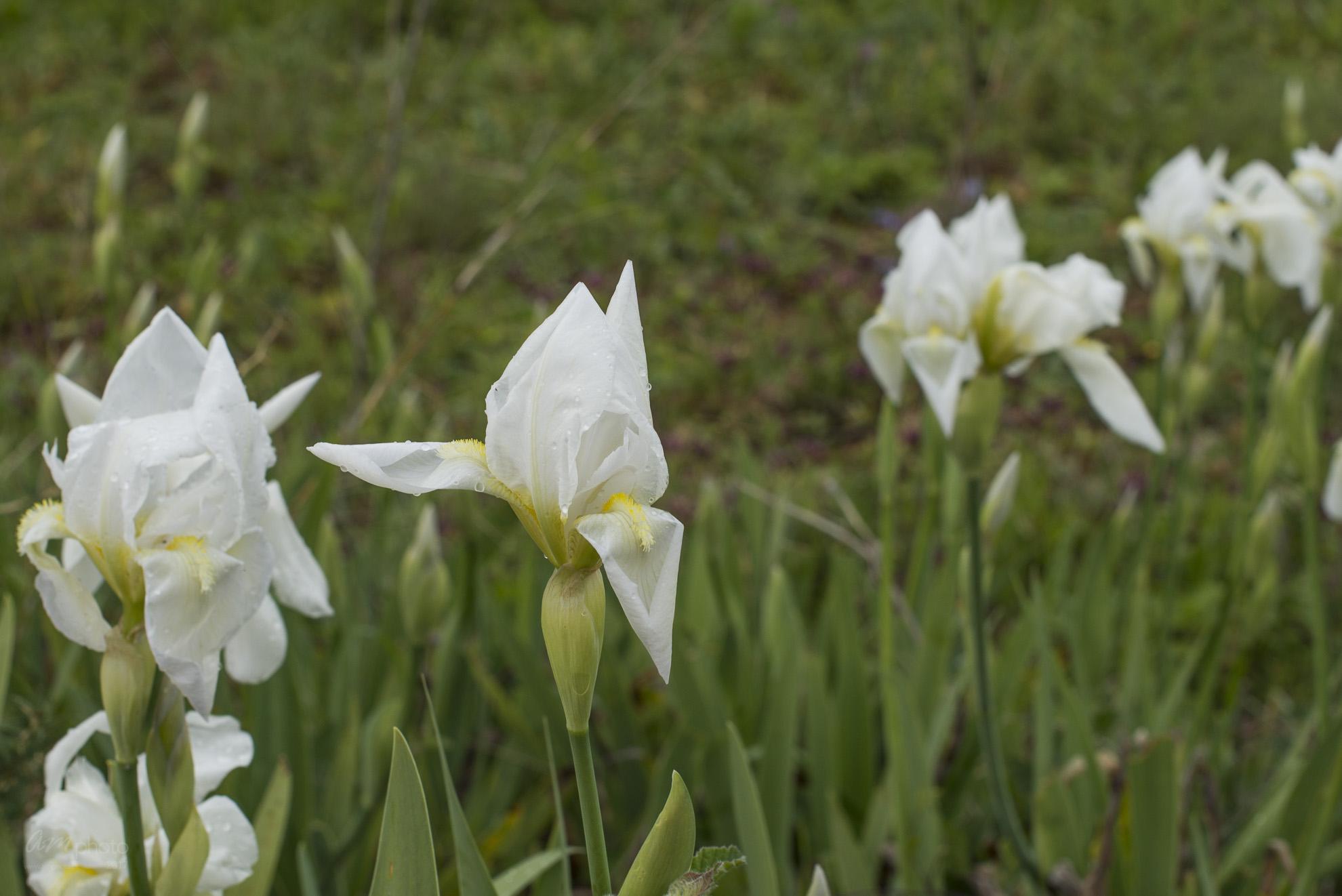 Wild Flowers-484