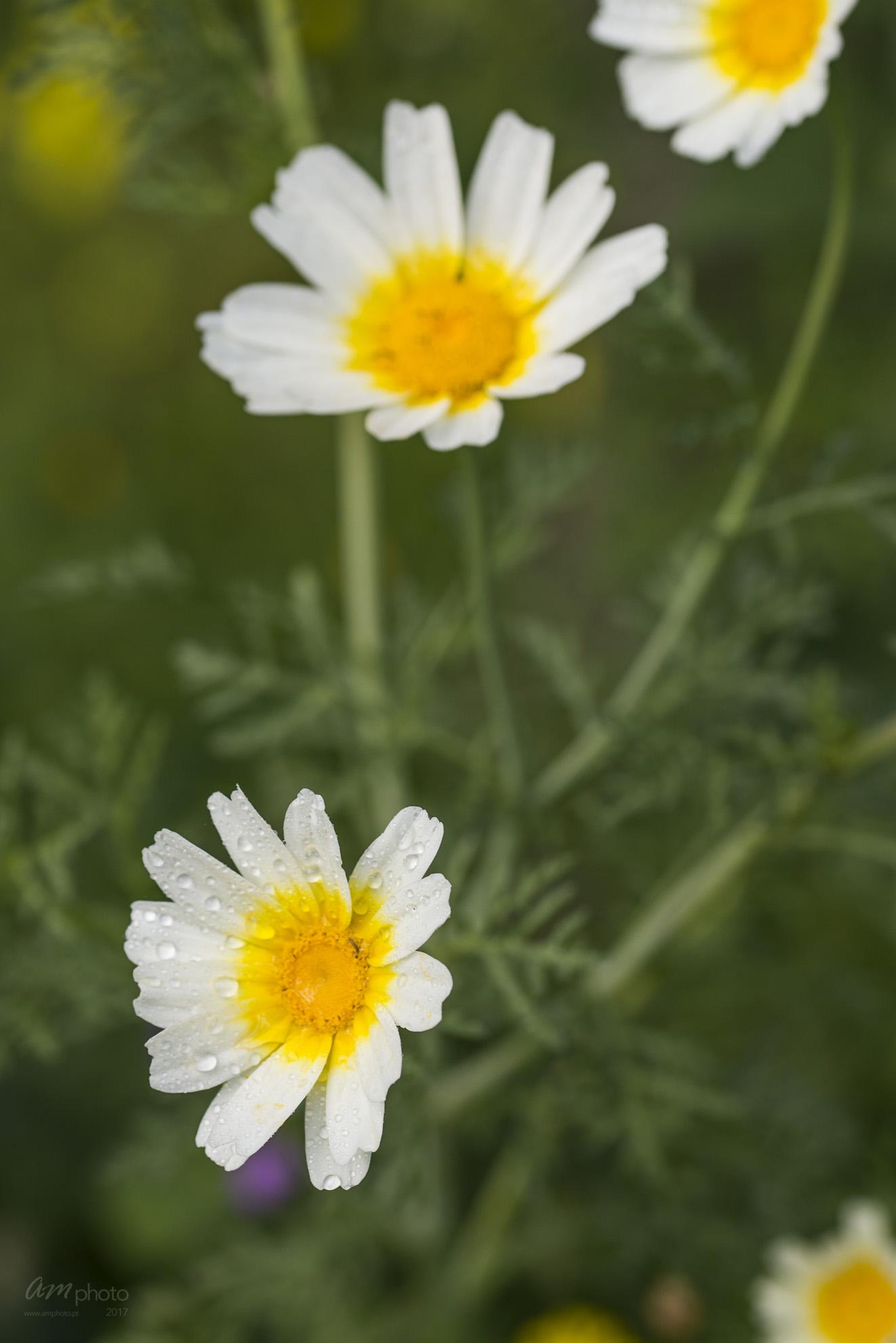 Wild Flowers-498