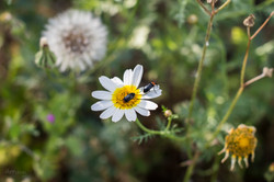Wild Flowers-106