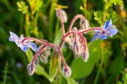 Wild Flowers-634
