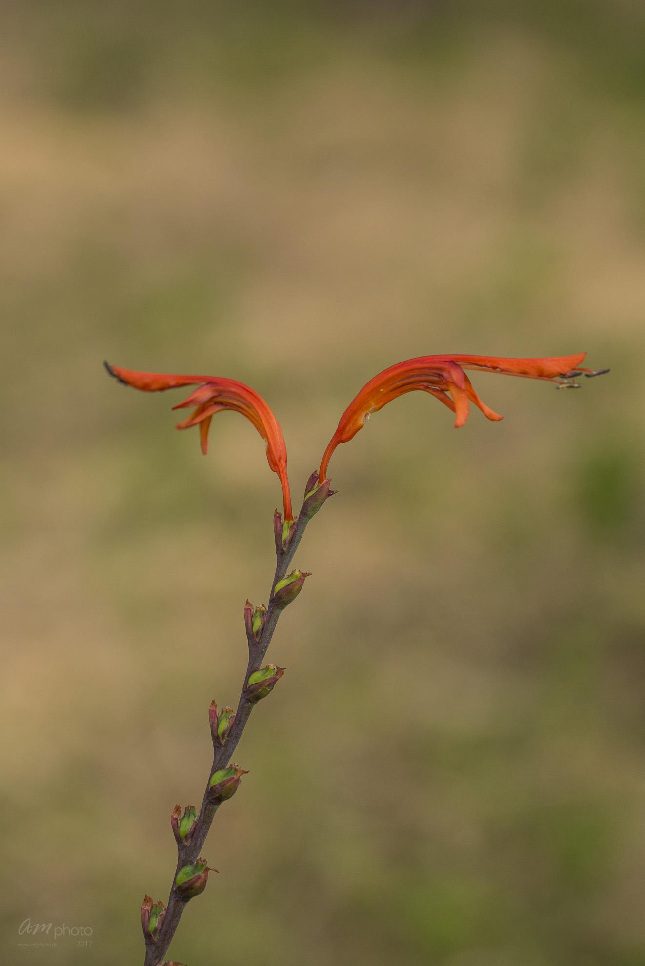 Wild Flowers-546