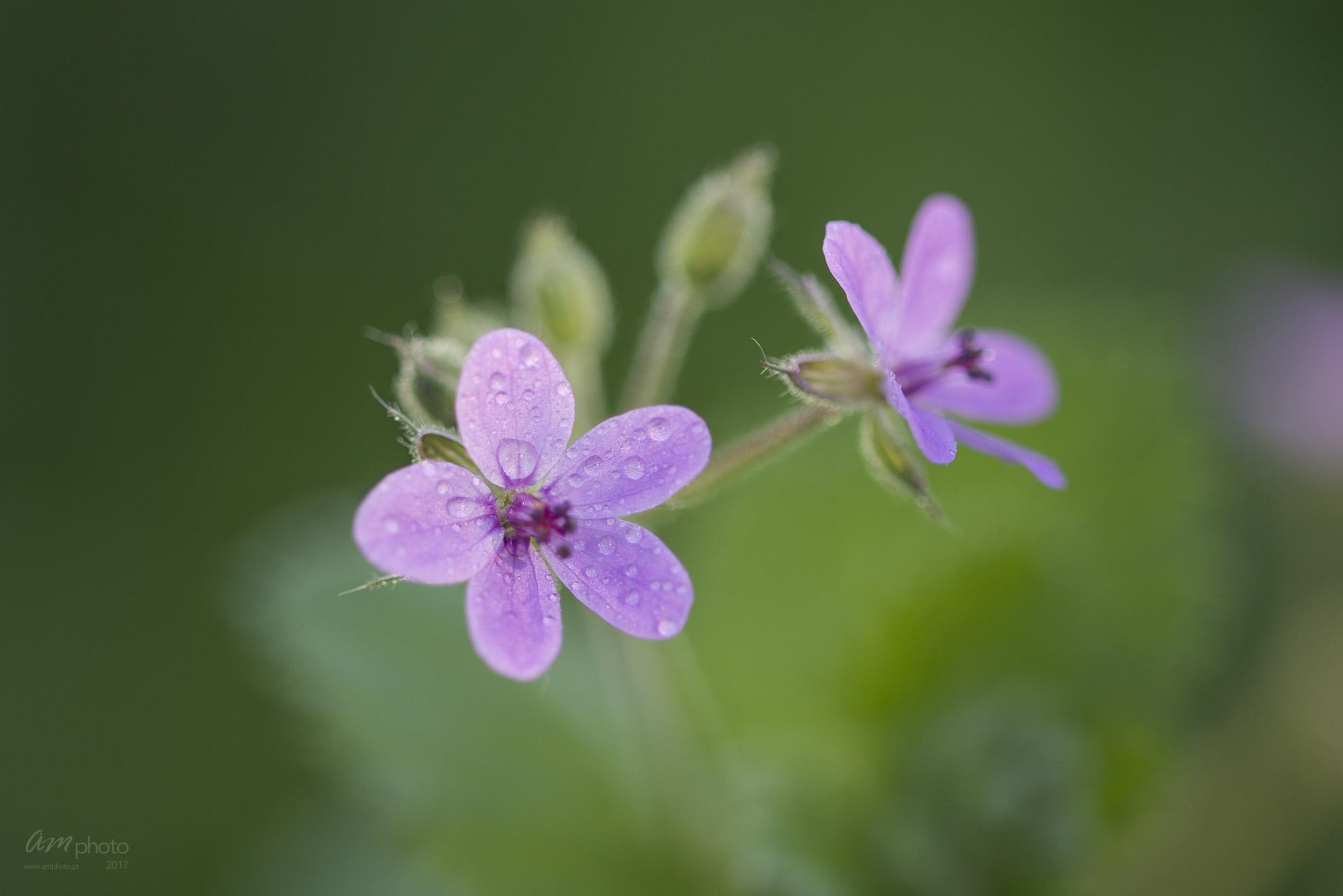 Wild Flowers-386