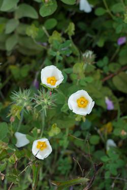 Wild Flowers-186