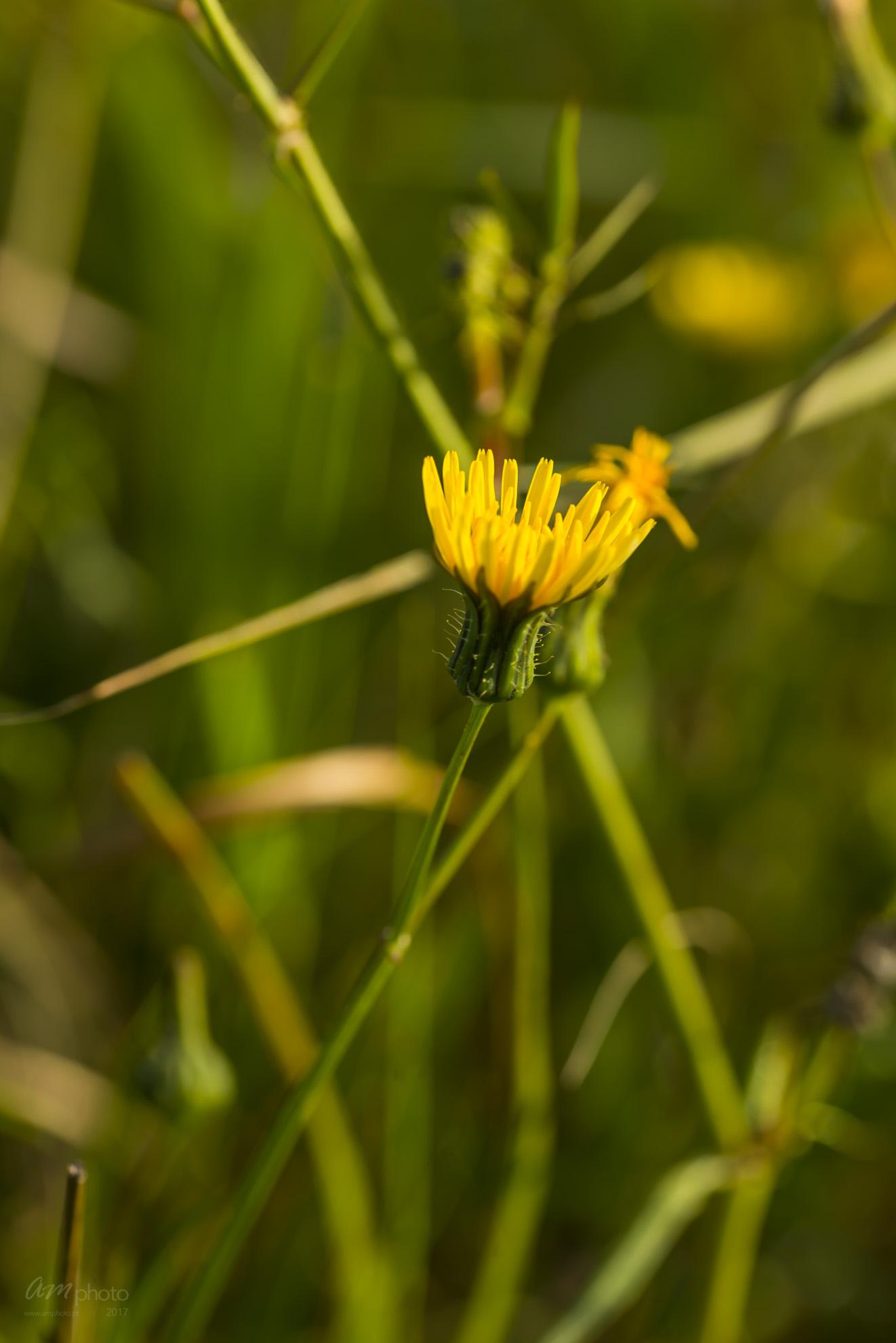 Wild Flowers-645