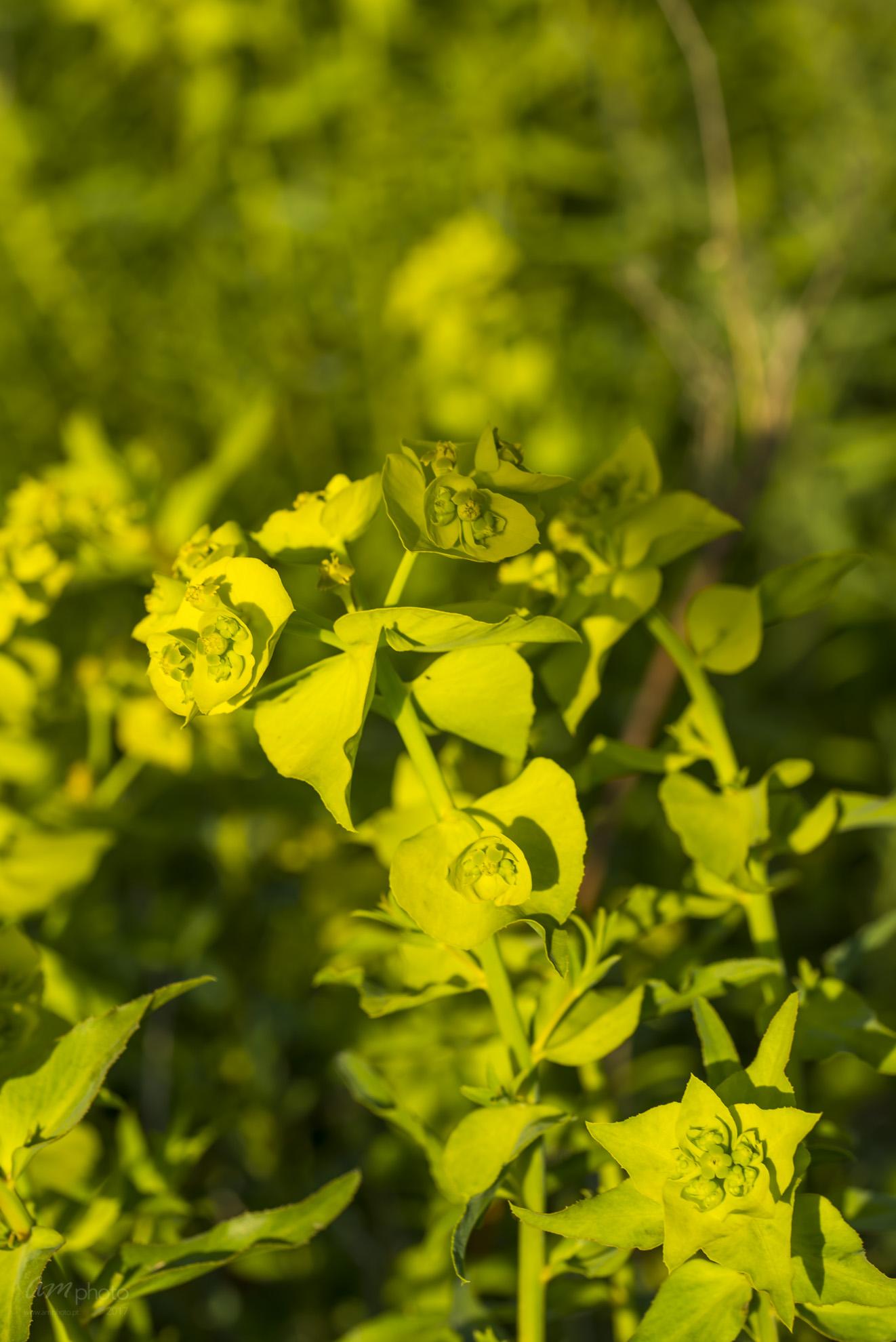 Wild Flowers-646