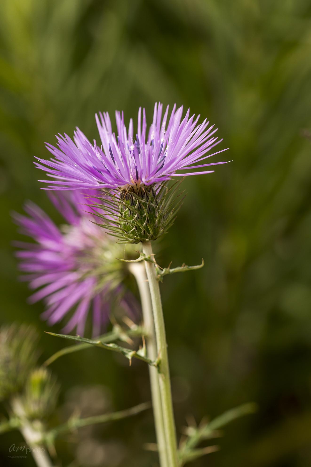 Wild Flowers-518