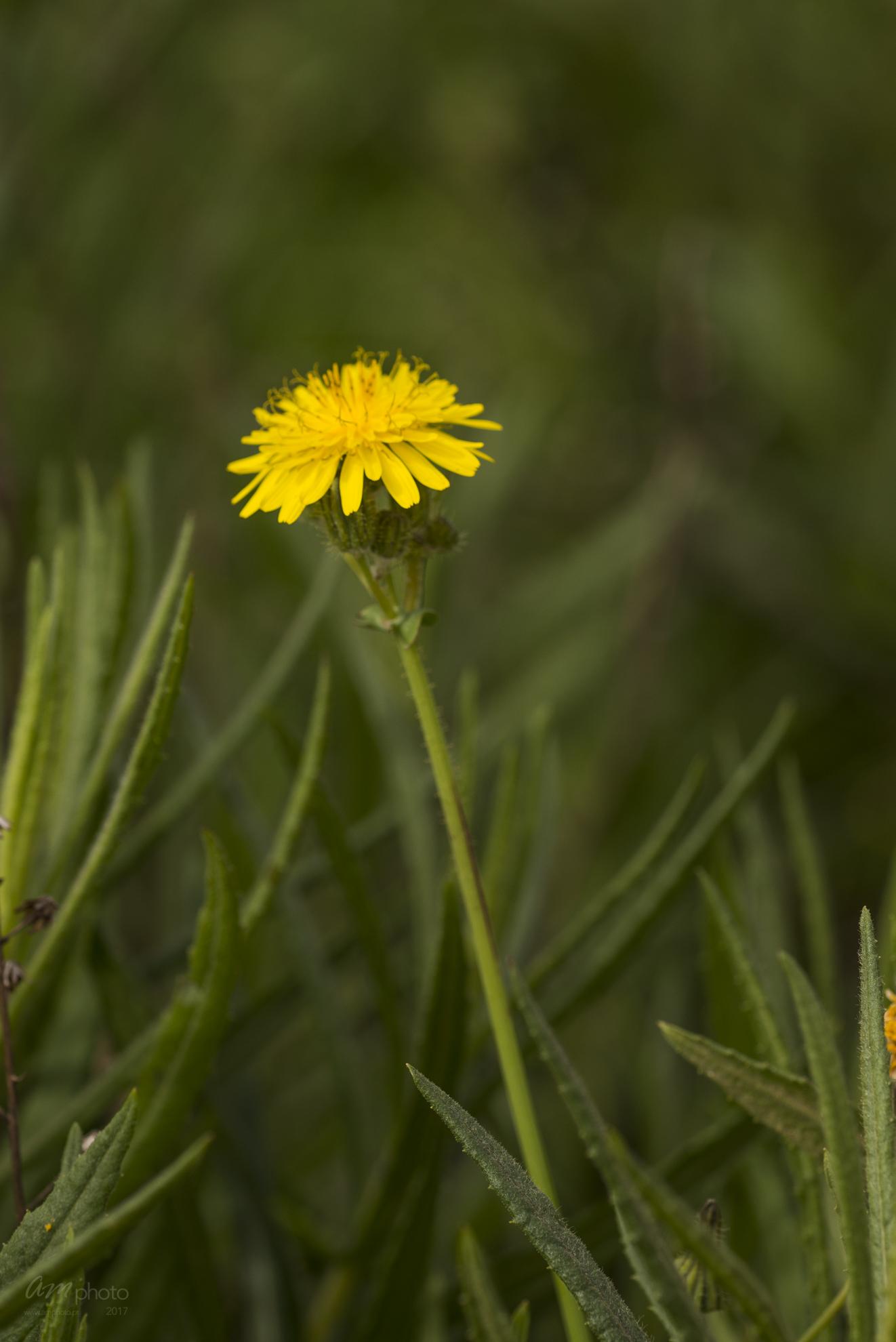 Wild Flowers-519