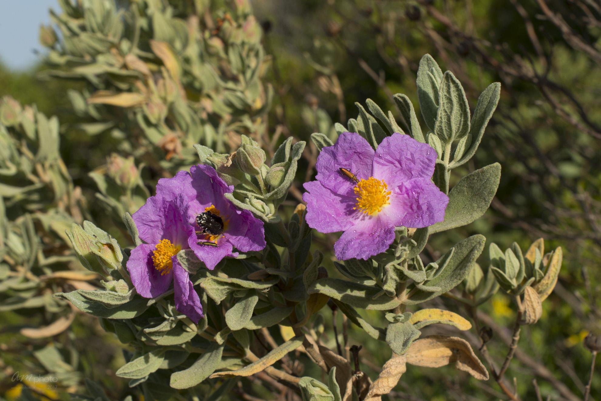 Wild Flowers-152