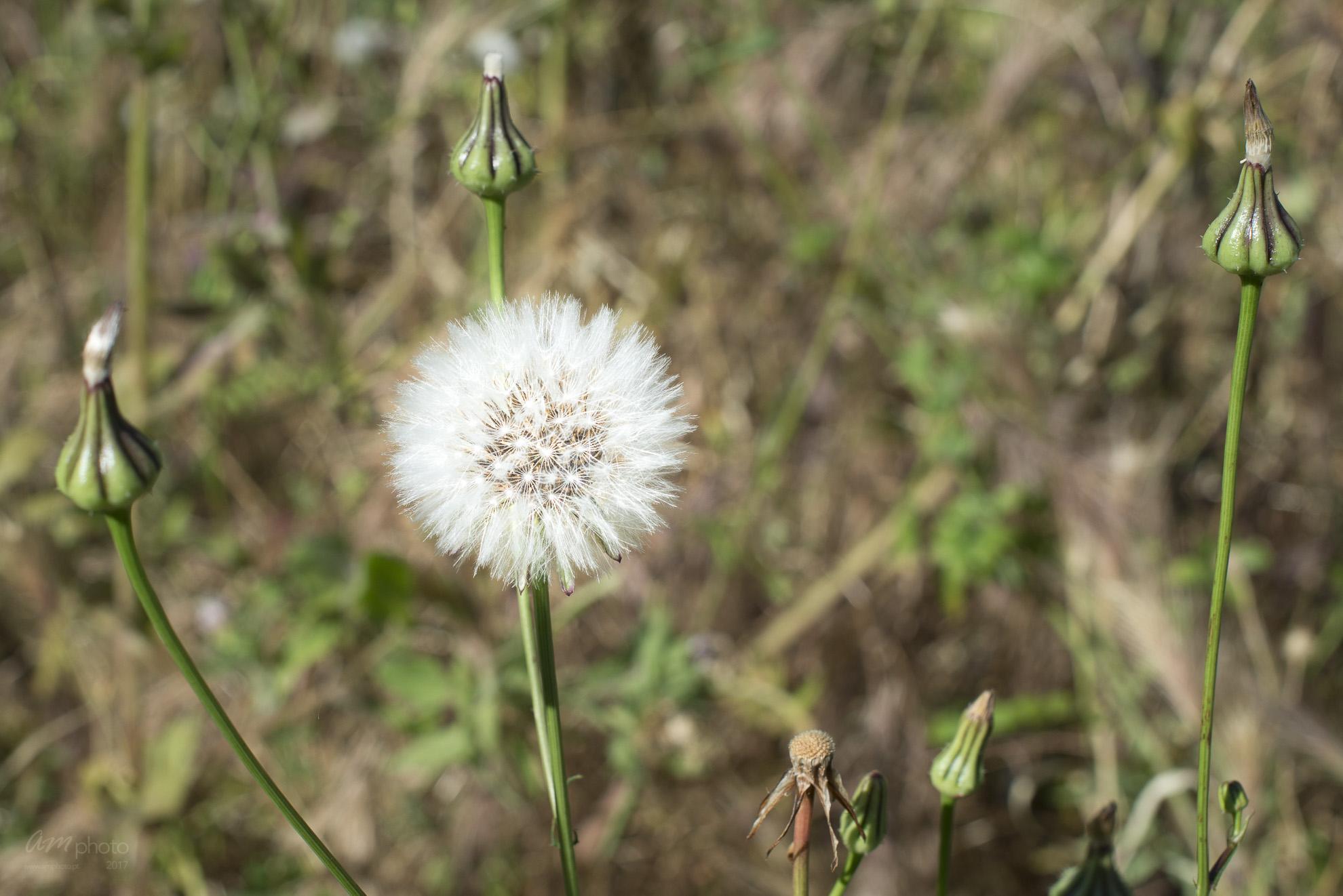 Wild Flowers-105