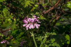 Wild Flowers-375