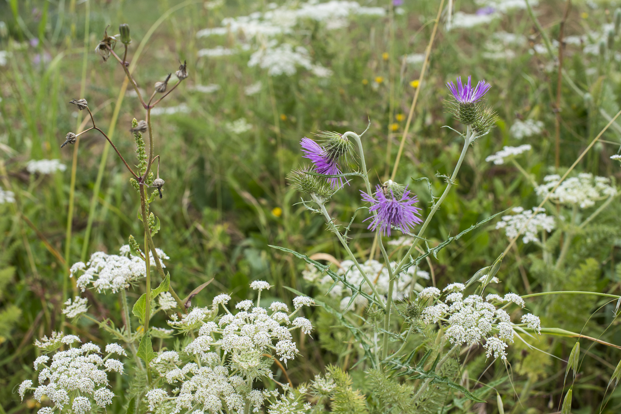 Wild Flowers-58