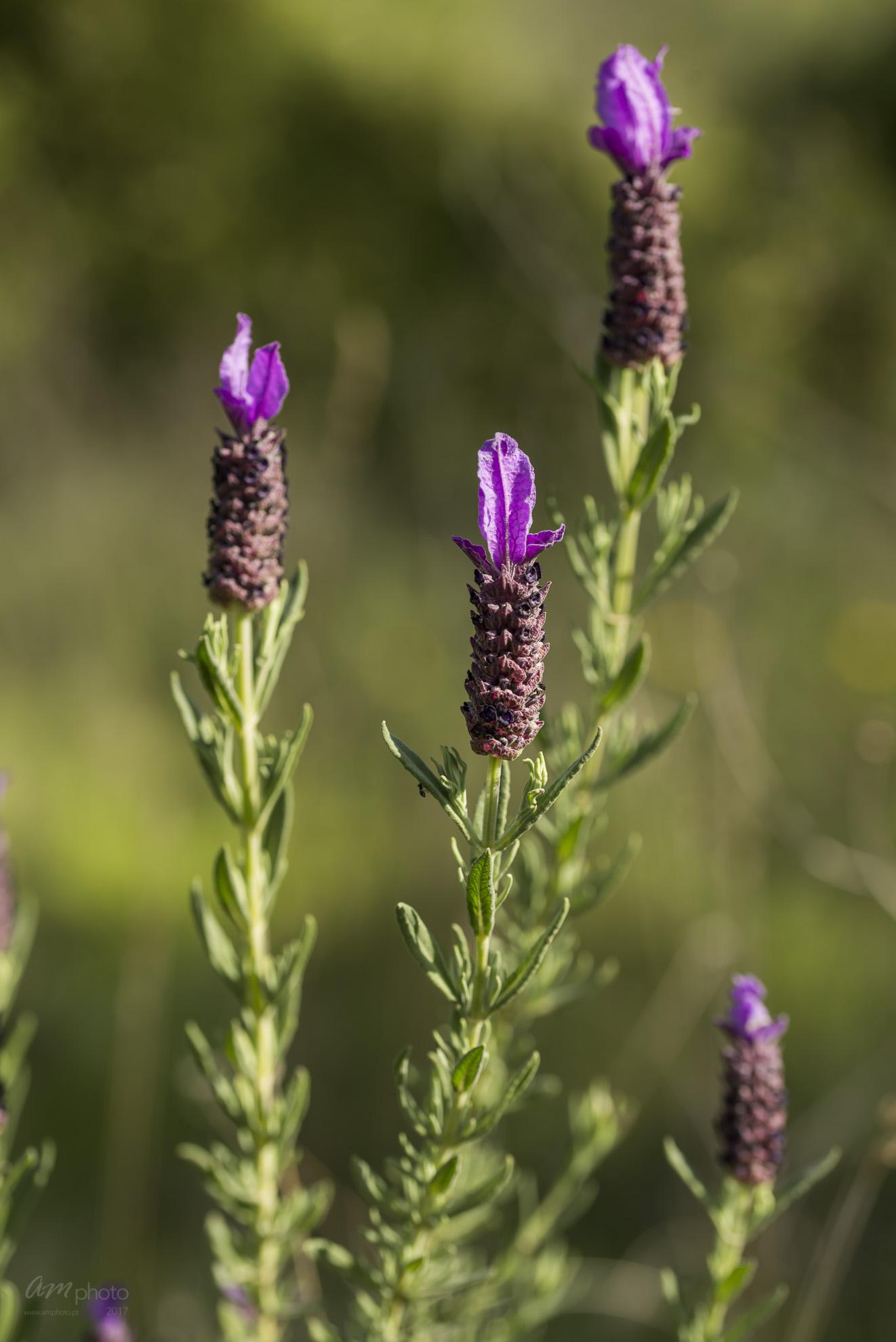 Wild Flowers-697