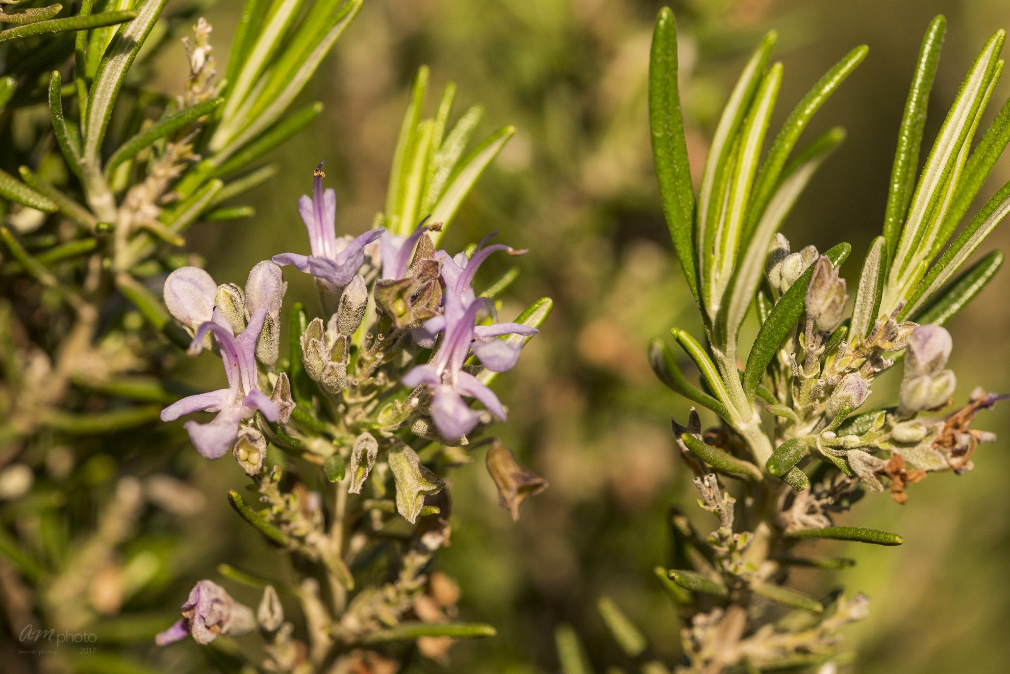 Wild Flowers-561