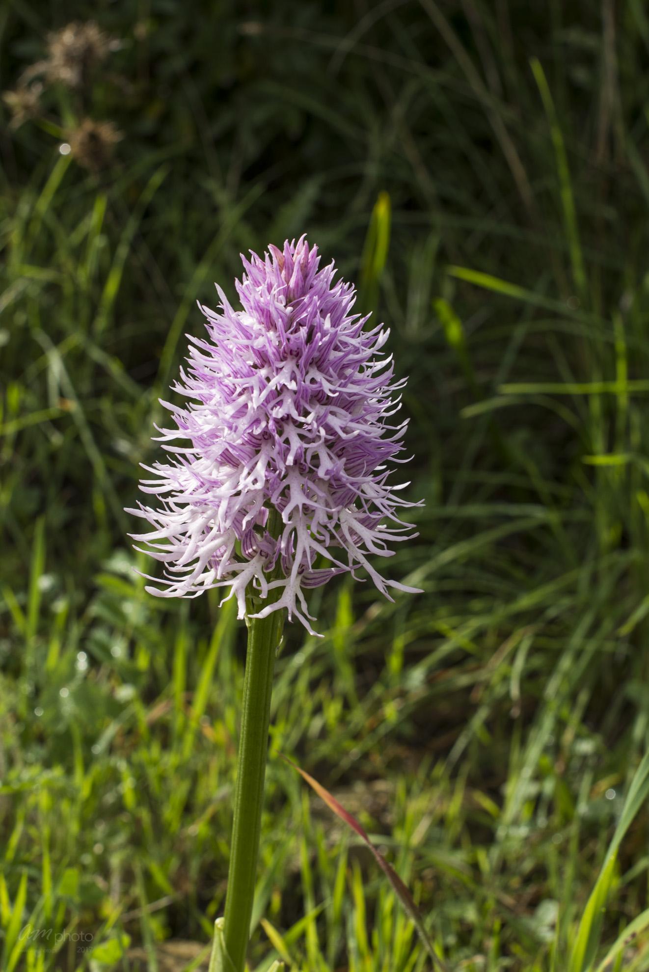 Wild Flowers-465