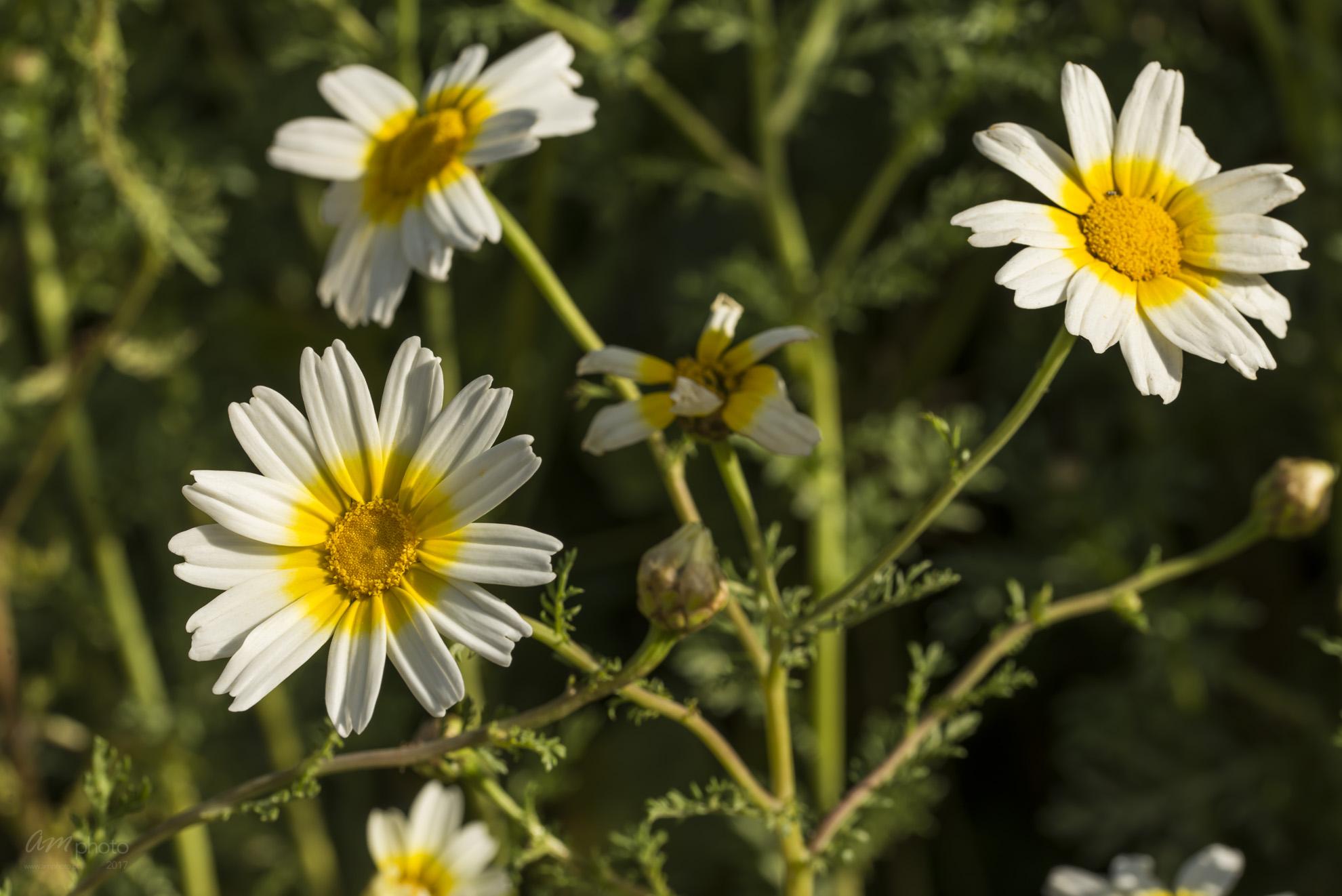 Wild Flowers-657