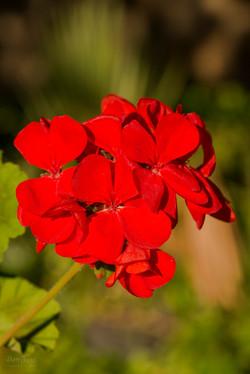 Wild Flowers-562