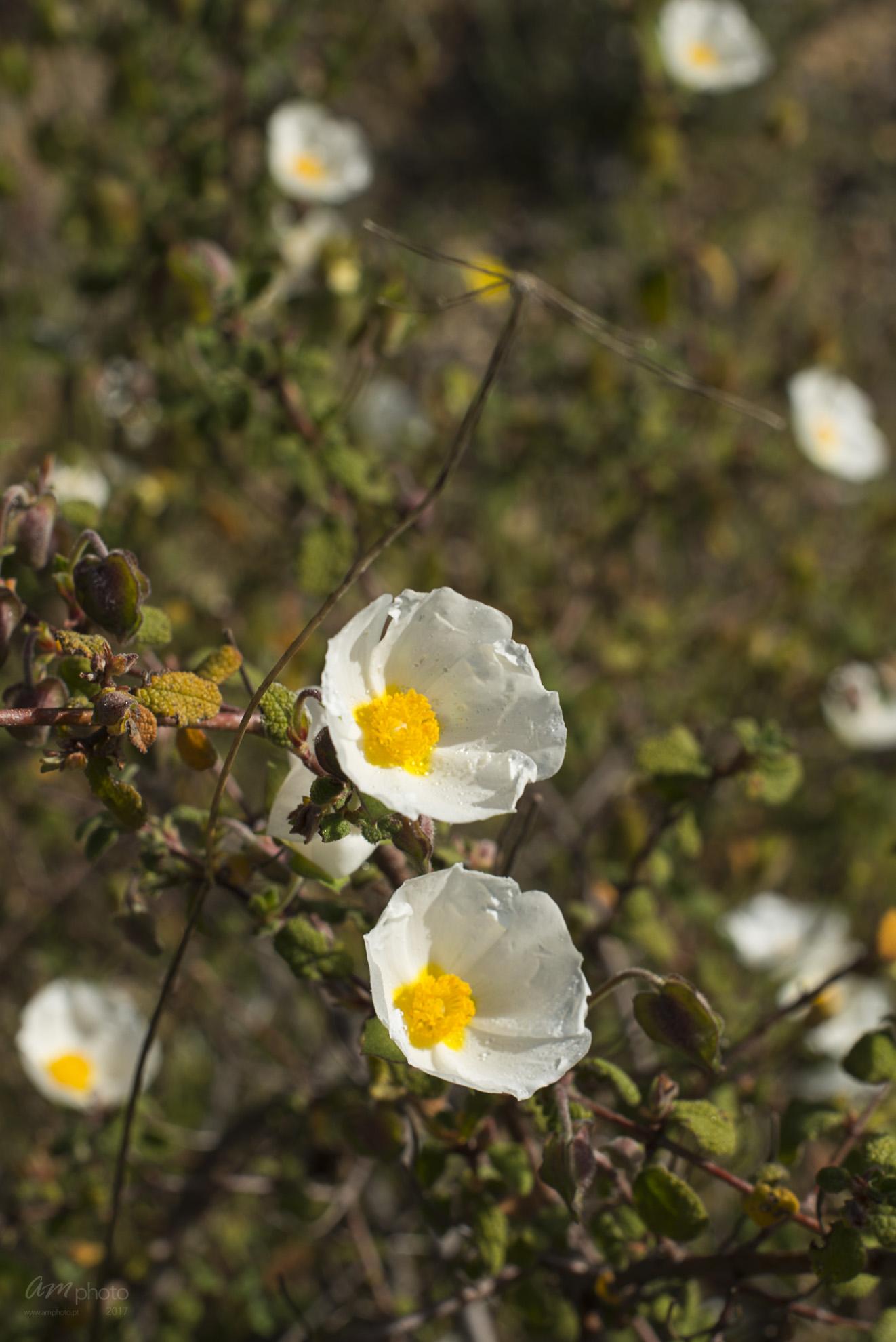 Wild Flowers-194