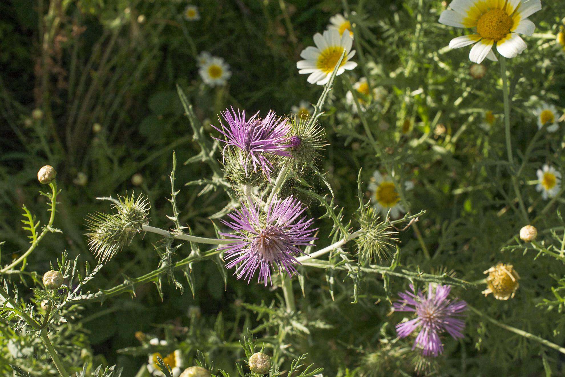 Wild Flowers-248